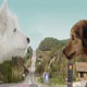 狗狗的爱情 雪铁龙新C3创意广告